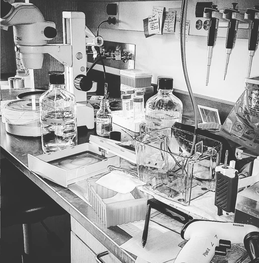Black and white artistic photo of a messy lab bench with equipment for a Western blot strewn about.